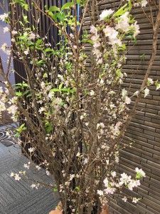 IMG_0993 桜