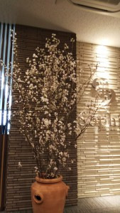 DSC_0908啓翁桜